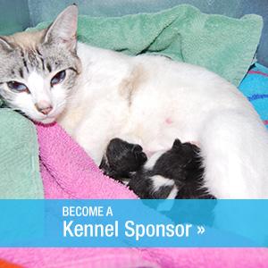 Kennel-Sponsor