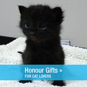 cat-lovers-honour-gifts