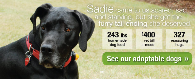 Sadie_banner_home