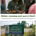 LAPS_Kitten_Day-page-001[2]