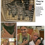 LAPS_Kitten_Day-page-003[1]