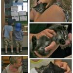 LAPS_Kitten_Day-page-004[1]