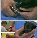 LAPS_Kitten_Day-page-007[1]