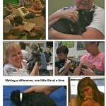 LAPS_Kitten_Day-page-011[1]