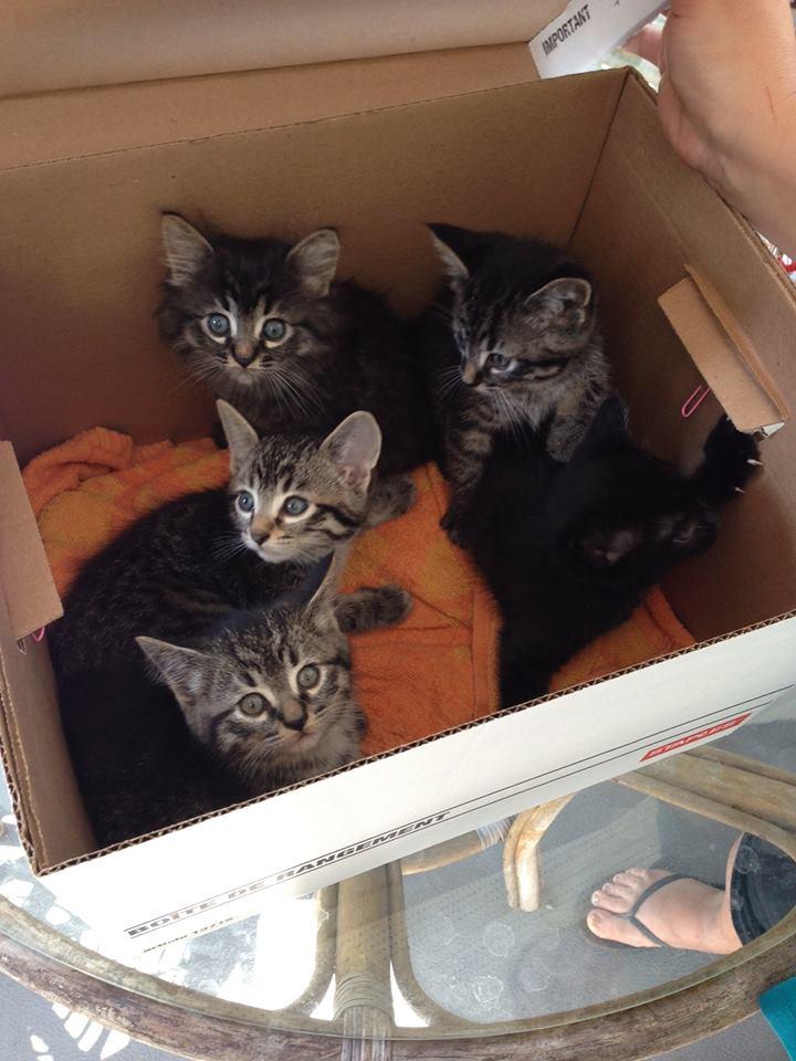 Petsmart Langley Cats For Adoption
